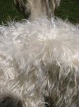 Fleece Close-Up